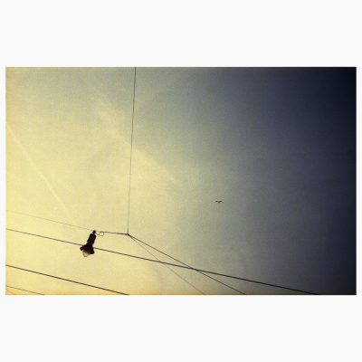 Composition of a bird and overhead lines, 2019